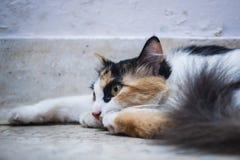 Cat resting on floor Royalty Free Stock Photo