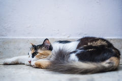Cat resting on floor Royalty Free Stock Images