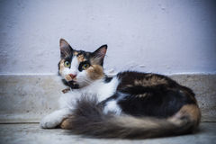 Cat resting on floor Stock Images
