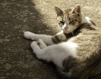 Cat resting on the floor stock photography
