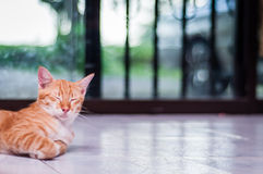 Cat resting on the floor Stock Photos