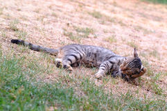 Cat resting on grass Royalty Free Stock Photo