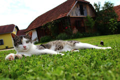 Cat resting on grass Stock Photography