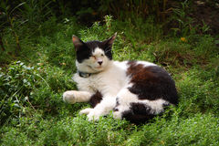 Cat resting on grass. Cat resting in the grass on a sunny day royalty free stock images