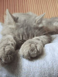 Cat resting stock photos