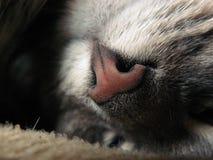 Cat resting stock images