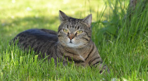 Cat resting. Grey cat resting under the tree Royalty Free Stock Photos