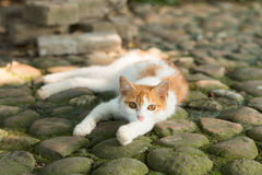 Cat. Resting on the ground Royalty Free Stock Photography