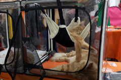 Cat resting in a hammock Stock Photos