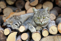 Cat resting on a heap of logs Stock Image