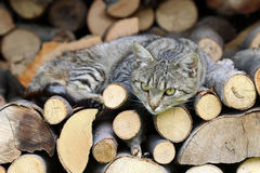 Cat resting on a heap of logs Stock Photography