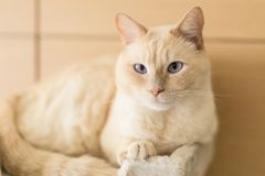Cat resting at home. Cat is resting at home after whole day playing royalty free stock photos