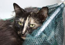 Cat. Resting in the landing net fish royalty free stock photos