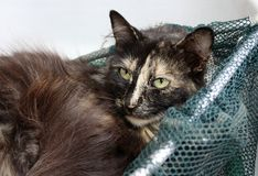 Cat. Resting in the landing net fish stock photography