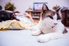 Cat resting on mattress Royalty Free Stock Images