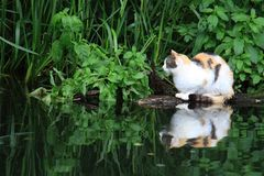 Cat Resting Near Pond royalty free stock photo