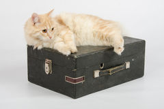 Cat resting on an old suitcase with a gramophone on a white background Royalty Free Stock Image