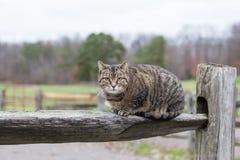 Cat Resting op Gespleten Spooromheining royalty-vrije stock afbeelding