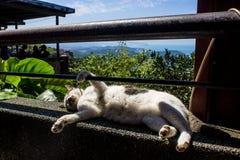 Cat Resting op Richel in Jiufen royalty-vrije stock foto