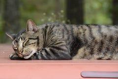 Cat Resting op Vrachtwagenbovenkant in Missouri Royalty-vrije Stock Afbeeldingen