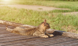 Cat resting in the park Royalty Free Stock Image