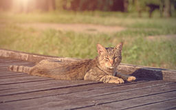 Cat resting in the park Royalty Free Stock Photos