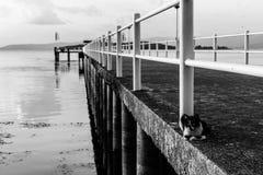 A cat on a pier on a lake. A cat resting on a pier on a lake Royalty Free Stock Photo