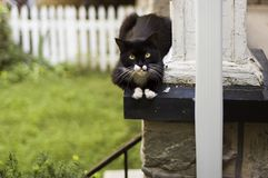 Cat resting on a porch. Stray cat lying on a porch Stock Images