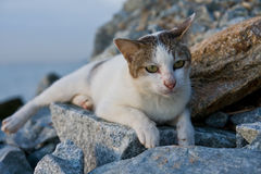 A cat resting on rocks by the sea Stock Photography