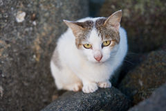 A cat resting on rocks by the sea Royalty Free Stock Images