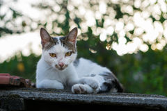 Cat resting on the rooftop Royalty Free Stock Image