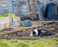 Cat Resting In Rustic Home Vegetable Patch Garden. Pet Animal Asleep Stock Photography