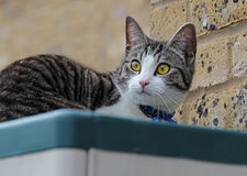 Cat resting on shed roof Stock Images