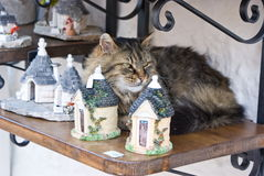 Cat resting on a shelf Royalty Free Stock Photo