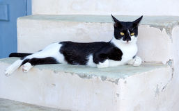 Cat resting on stairs in a Greek island Stock Photo