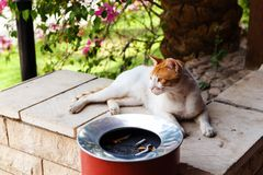 Cat resting on the steps. Royalty Free Stock Images
