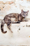 A cat resting on the steps in the old town of Naxos Royalty Free Stock Photos