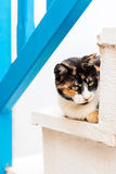 A cat resting on the steps in the old town of Naxos Royalty Free Stock Photography