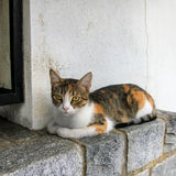 Cat. Resting on a stone step Stock Images