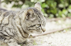 Cat resting on the street Stock Images