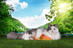 Cat resting after successful fishing on the grass Stock Image