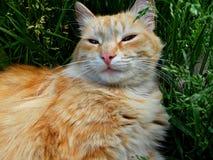 Cat resting. Royalty Free Stock Photos