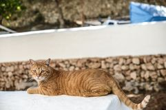 Cat resting in the sun stock photography