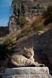 Cat resting in the sun Stock Image