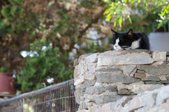 Cat Resting by the Sun royalty free stock photo