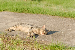 Cat resting on a sunny day Royalty Free Stock Image