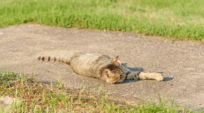Cat resting on a sunny day Stock Photo