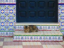 Cat resting on sunny doorstaep. Spanish tabby cat enjoying morning sun on tiled steps in Andalusian village royalty free stock photos