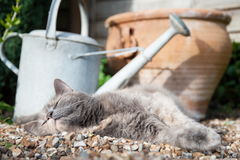 Cat resting in the sunshine. A gray cat resting on pebbly ground in a garden, its eyes closed Stock Image
