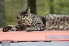 Cat Resting sur le dessus de camion au Missouri Photos stock
